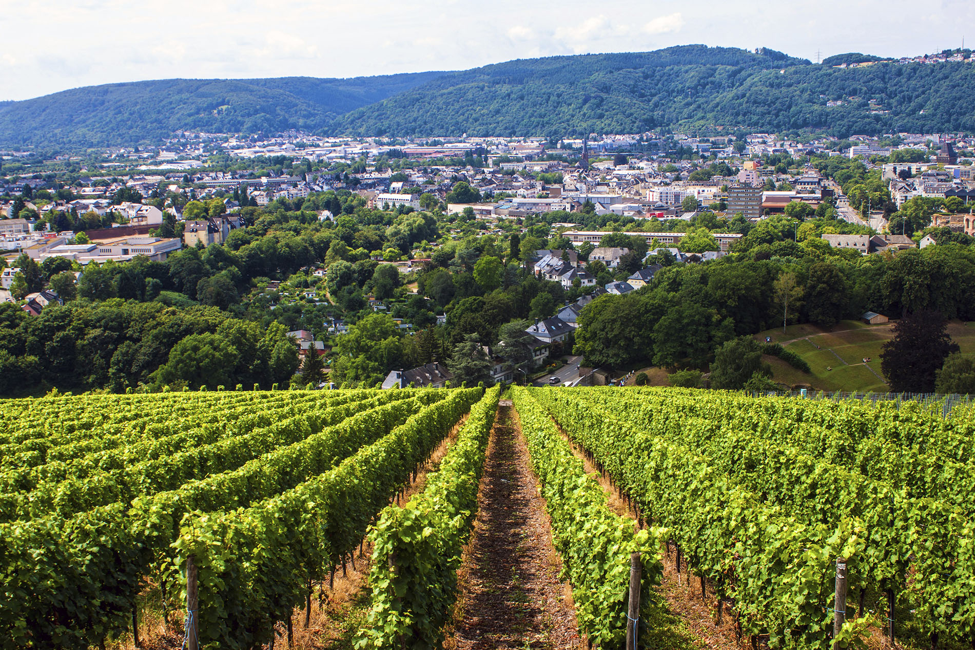 Uniform vineyard rows overlooking the gorgeous city of Trier, Germany