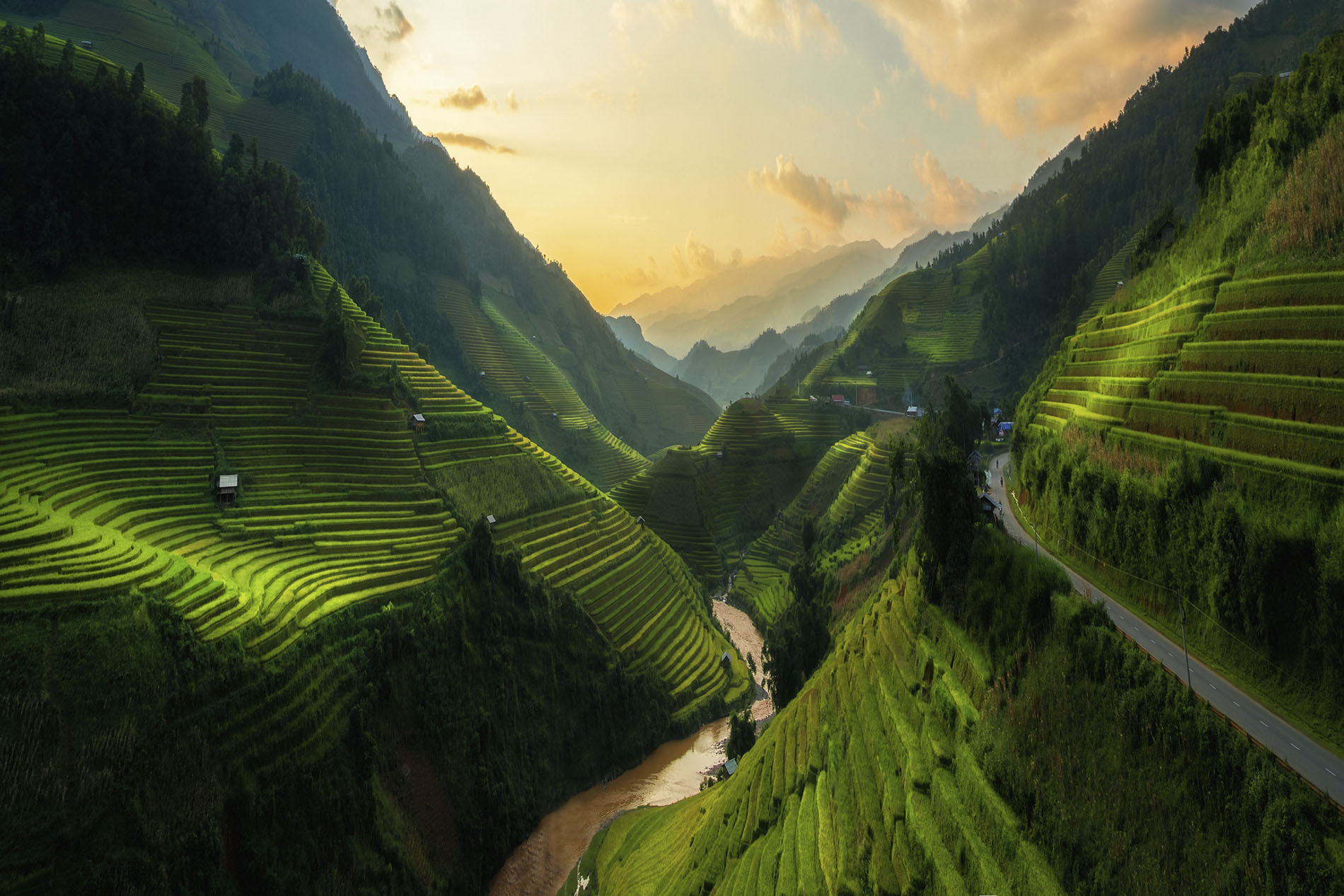 Vietnam rice fields