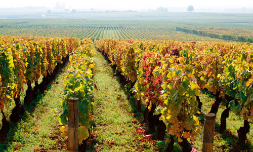 The Burgundy wine region is home to some of the world's most expensive wines